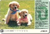200310jreio_c7e7381.jpg