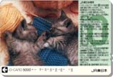 200311jreio_d1j0617.jpg